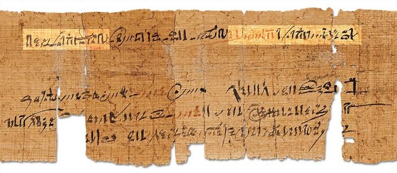 Папирус (растение)