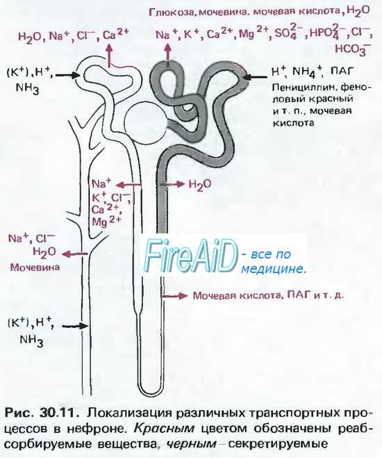 Секреция — большая медицинская энциклопедия