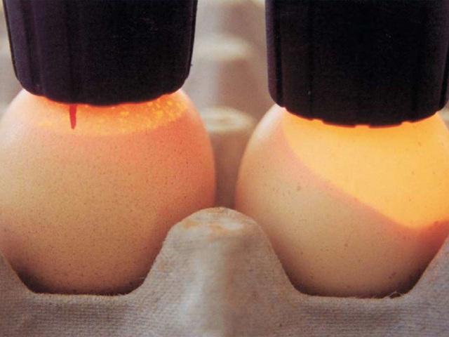 Овоскоп: конструкция, описание, проверка яиц, как сделать самому