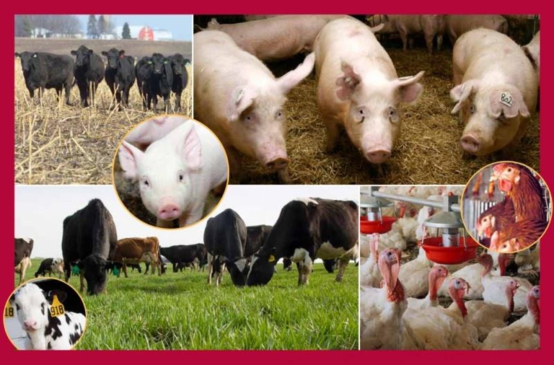 Животноводство - это что такое?