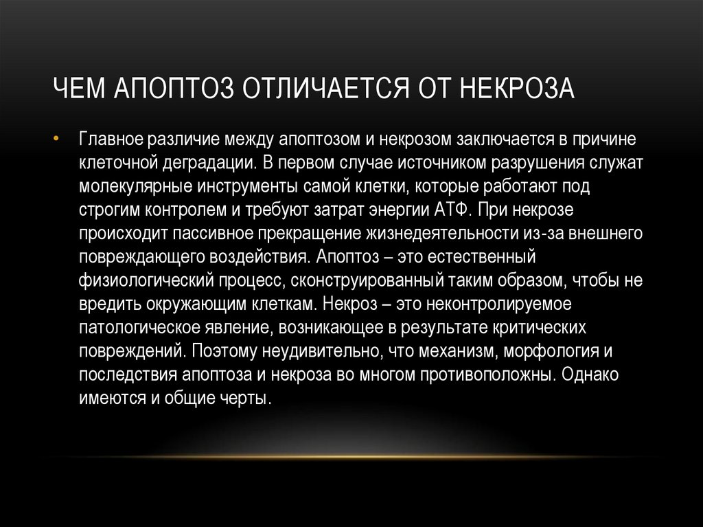 Апоптоз | cell biology.ru