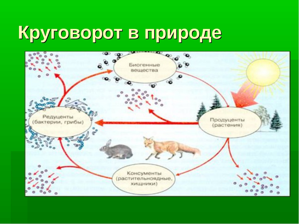 Биотический круговорот: описание и значение процесса