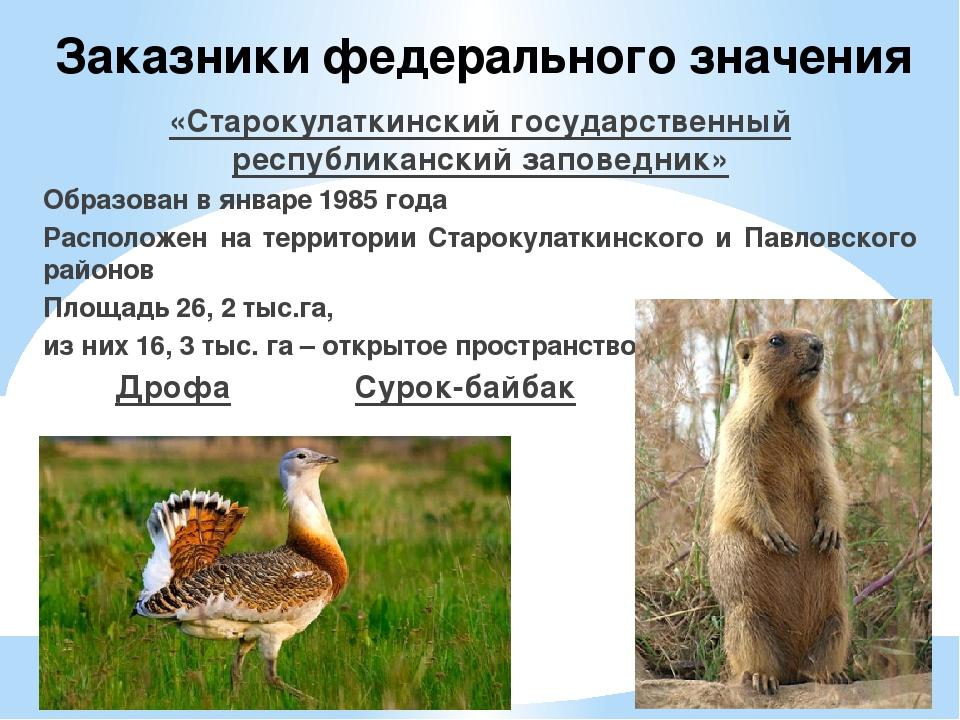 Что такое заказник? это тот же заповедник или что-то иное? виды заказников :: businessman.ru
