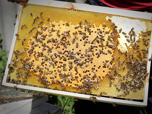 Пчеловодство для начинающих: основы, советы, особенности ухода и правила организации бизнеса (110 фото + видео)