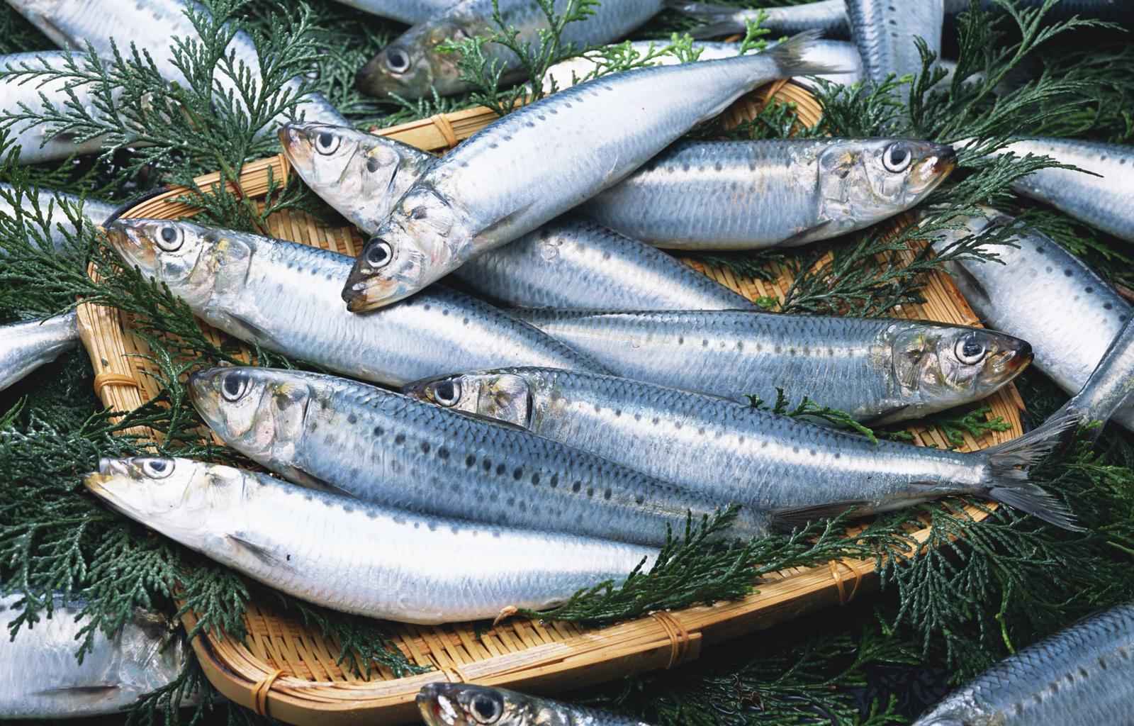 Что такое иваси? сельдь иваси. блюда из рыбы иваси