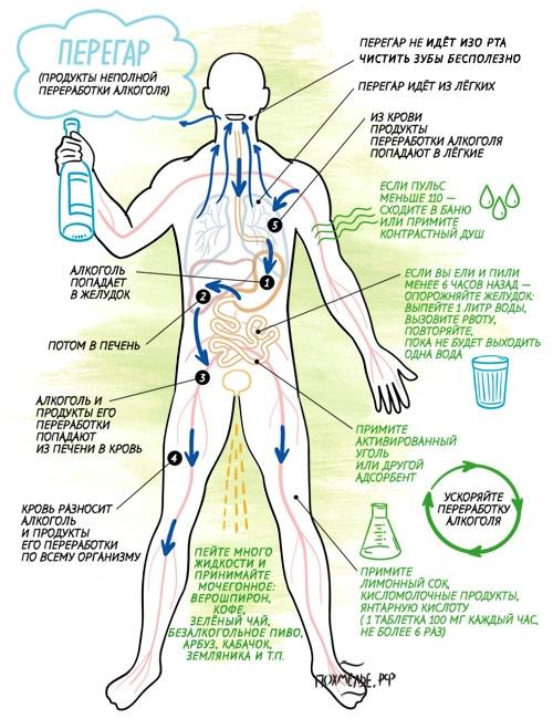 Похмельный синдром: симптомы и что это такое