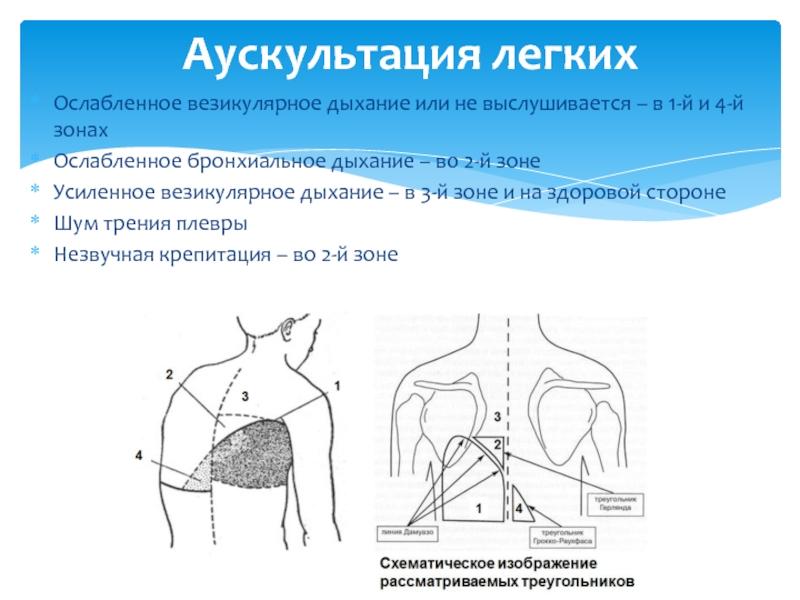 Везикулярное дыхание определение. везикулярное дыхание - физиология и патология - лечение