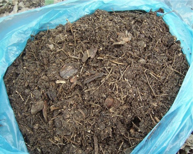 Все о торфяной почве