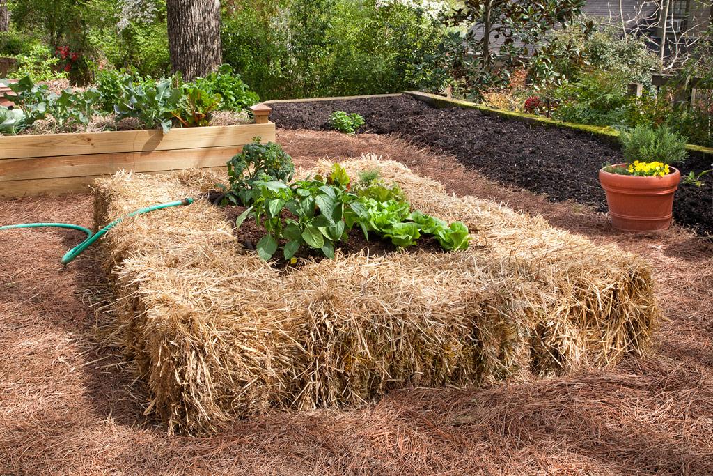 Всё, что нужно знать садоводу о мульчировании почвы