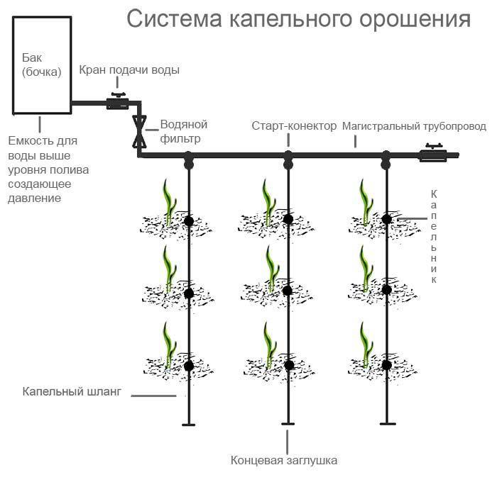 Особенности системы микрокапельного полива и правила использования