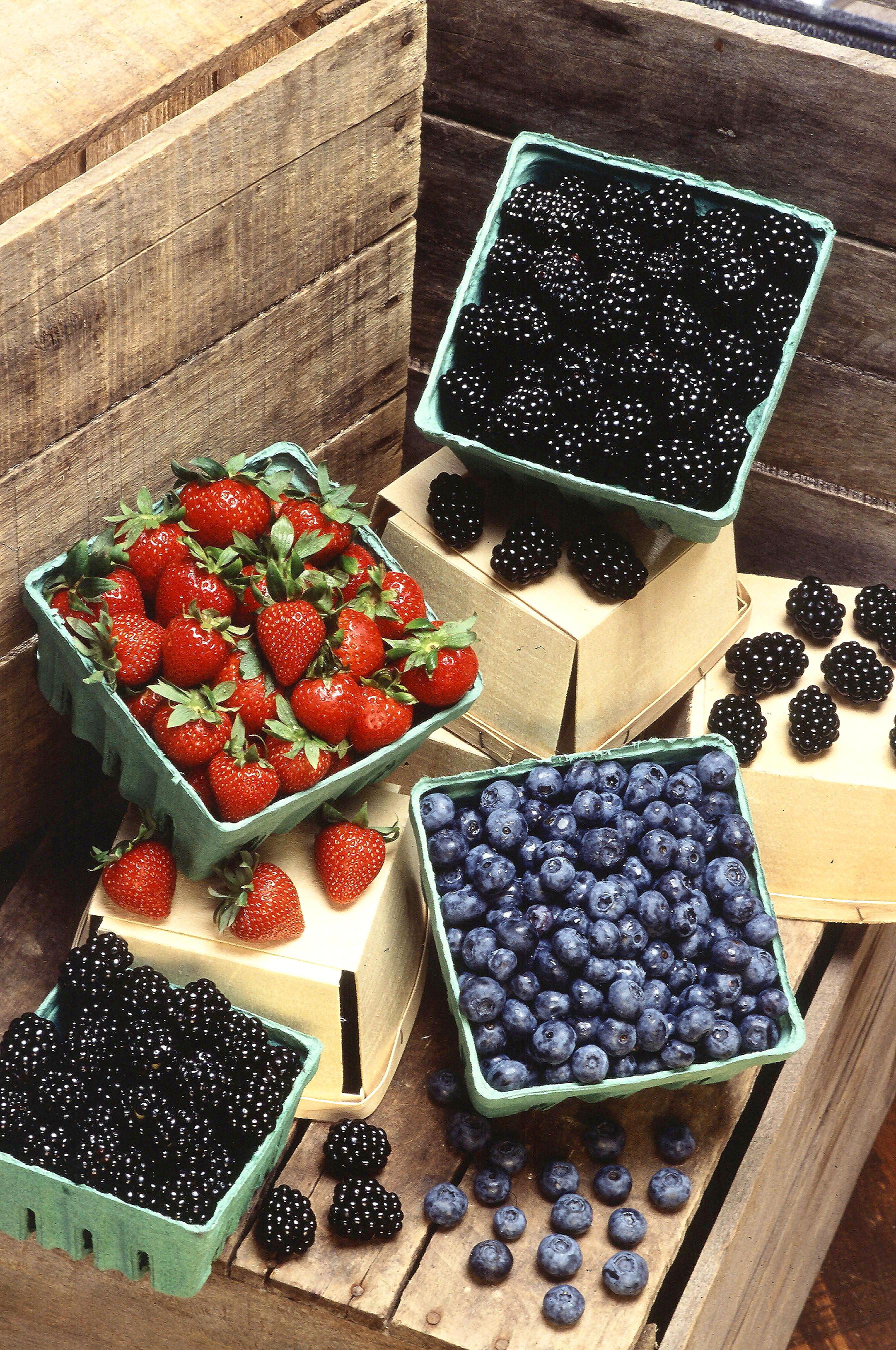Лесные ягоды с фото: список с названиями, отличия между съедобными и ядовитыми, правила сбора