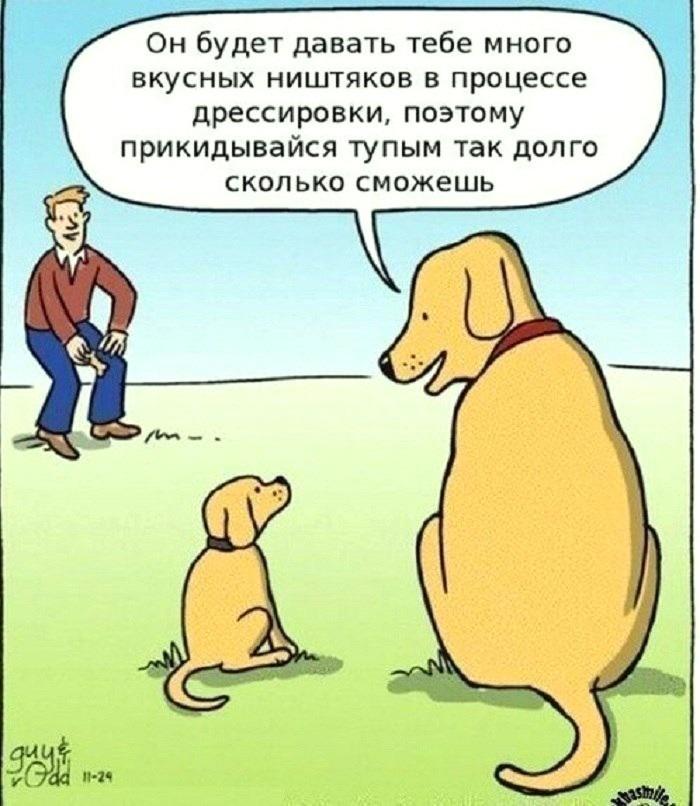 Оливки или маслины — в чём разница и польза? разновидности. фото — ботаничка.ru