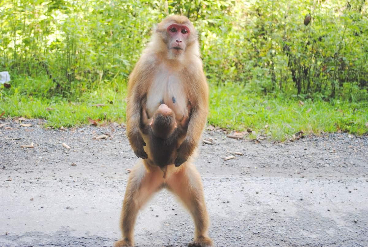 Обезьяна - monkey - qwe.wiki