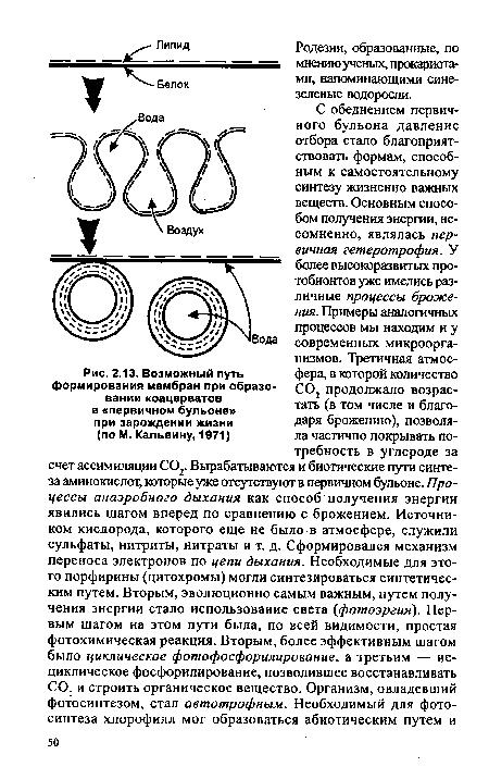 Коацерват - coacervate - qwe.wiki