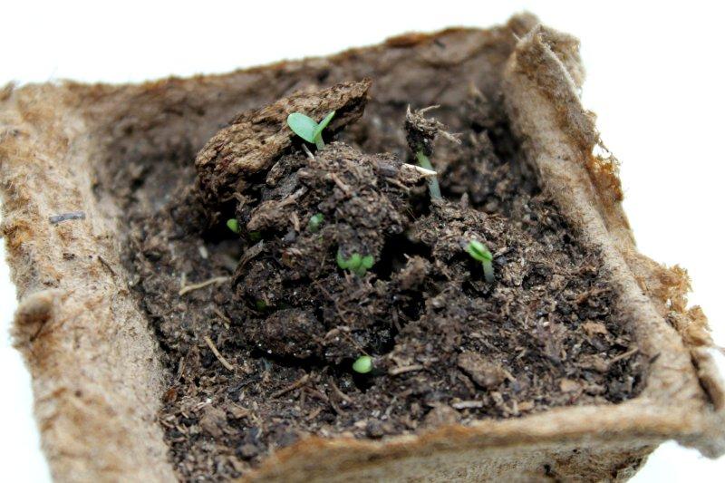 Стратификация семян в домашних условиях: для чего нужна и как делать