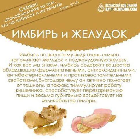 Имбирь: состав, полезные свойства и противопоказания, применение имбиря в кулинарии и лечебных целях