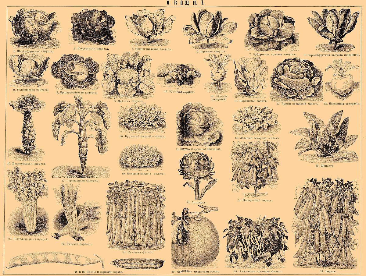 Полный список названий овощей по алфавиту с фотографиями