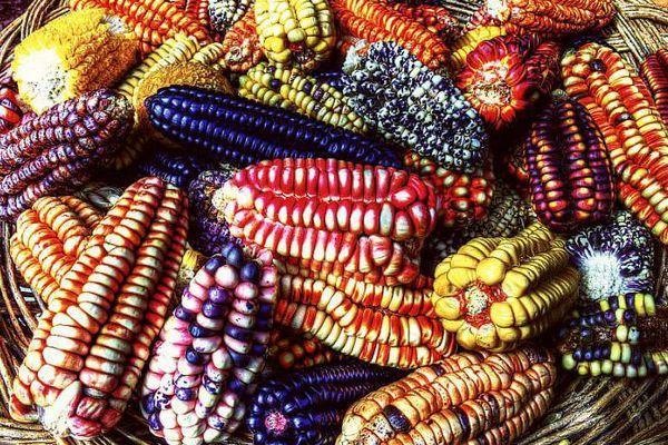 Что такое кукуруза - овощ или фрукт