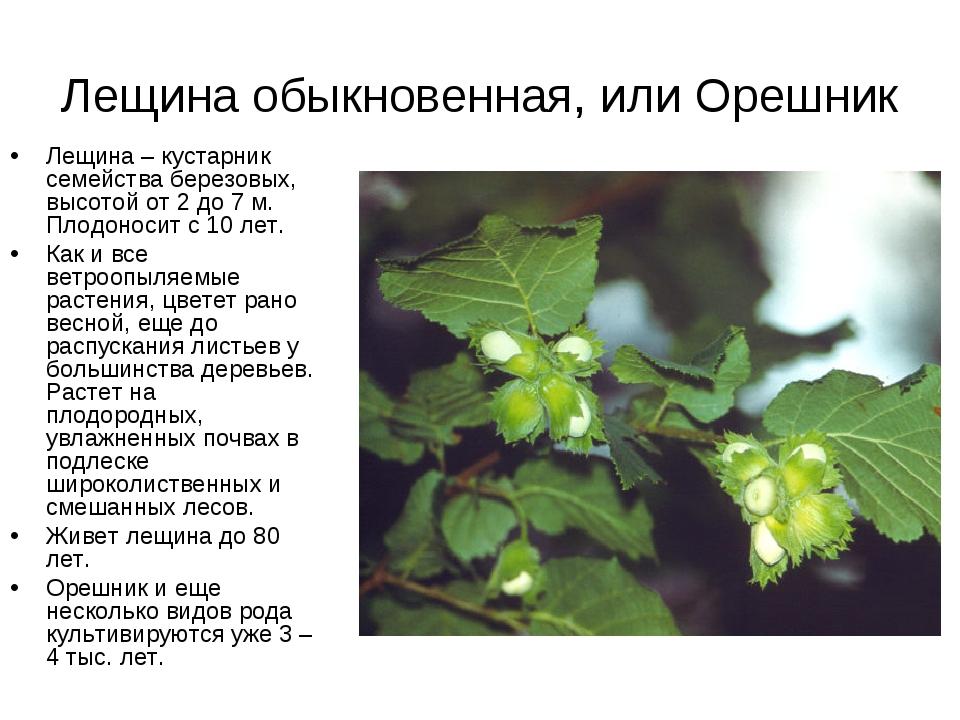 Сорта и виды дуба: описание и фото | деревянные материалы и их применение в строительстве | журнал дока