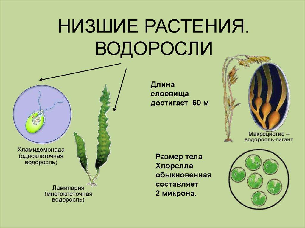 Какие растения называют высшими? примеры, признаки и характеристика высших растений