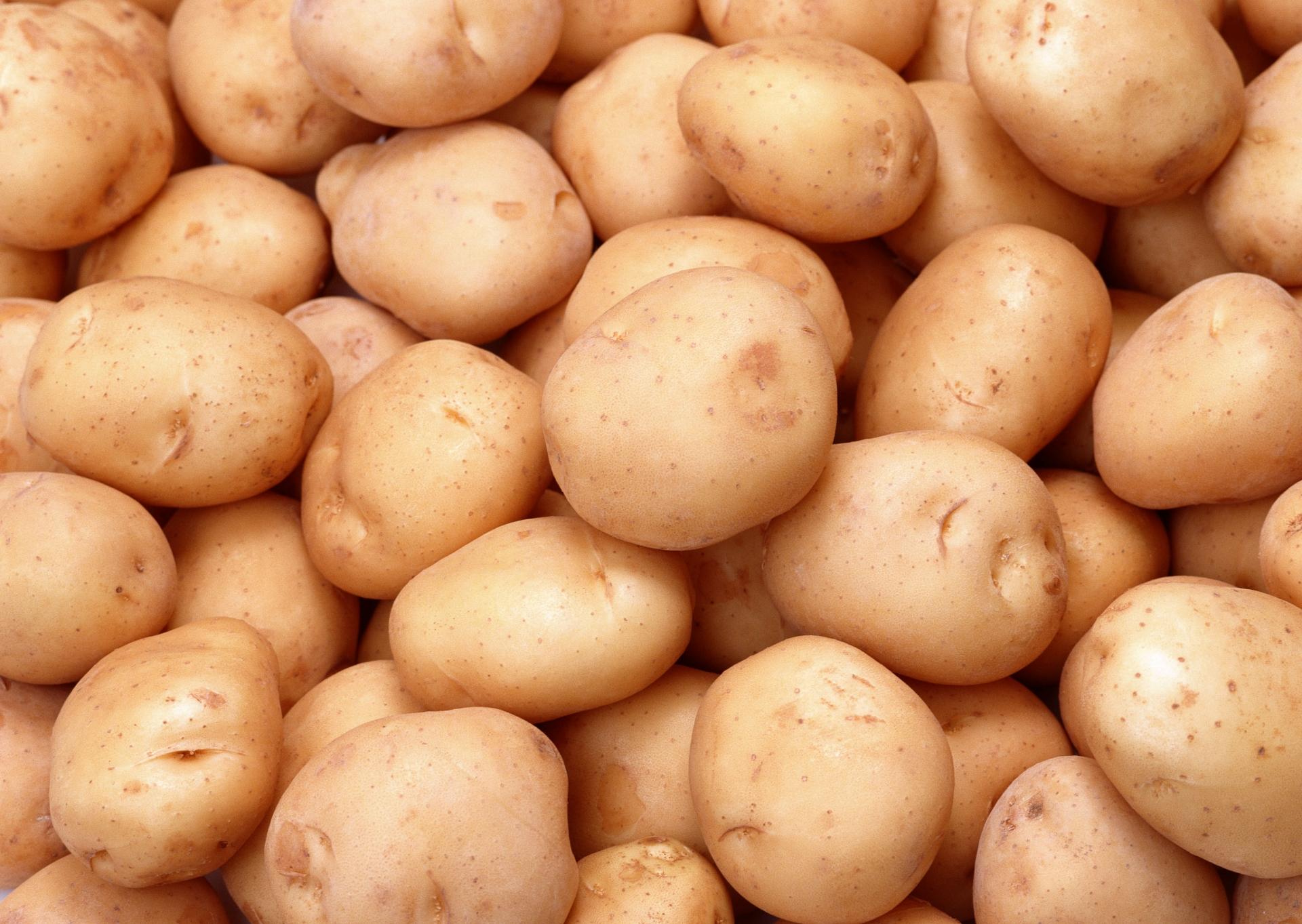 Ботанические и биологические особенности картофеля