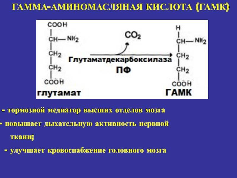 Гамма-аминомасляная кислота – что это такое, препараты и отзывы
