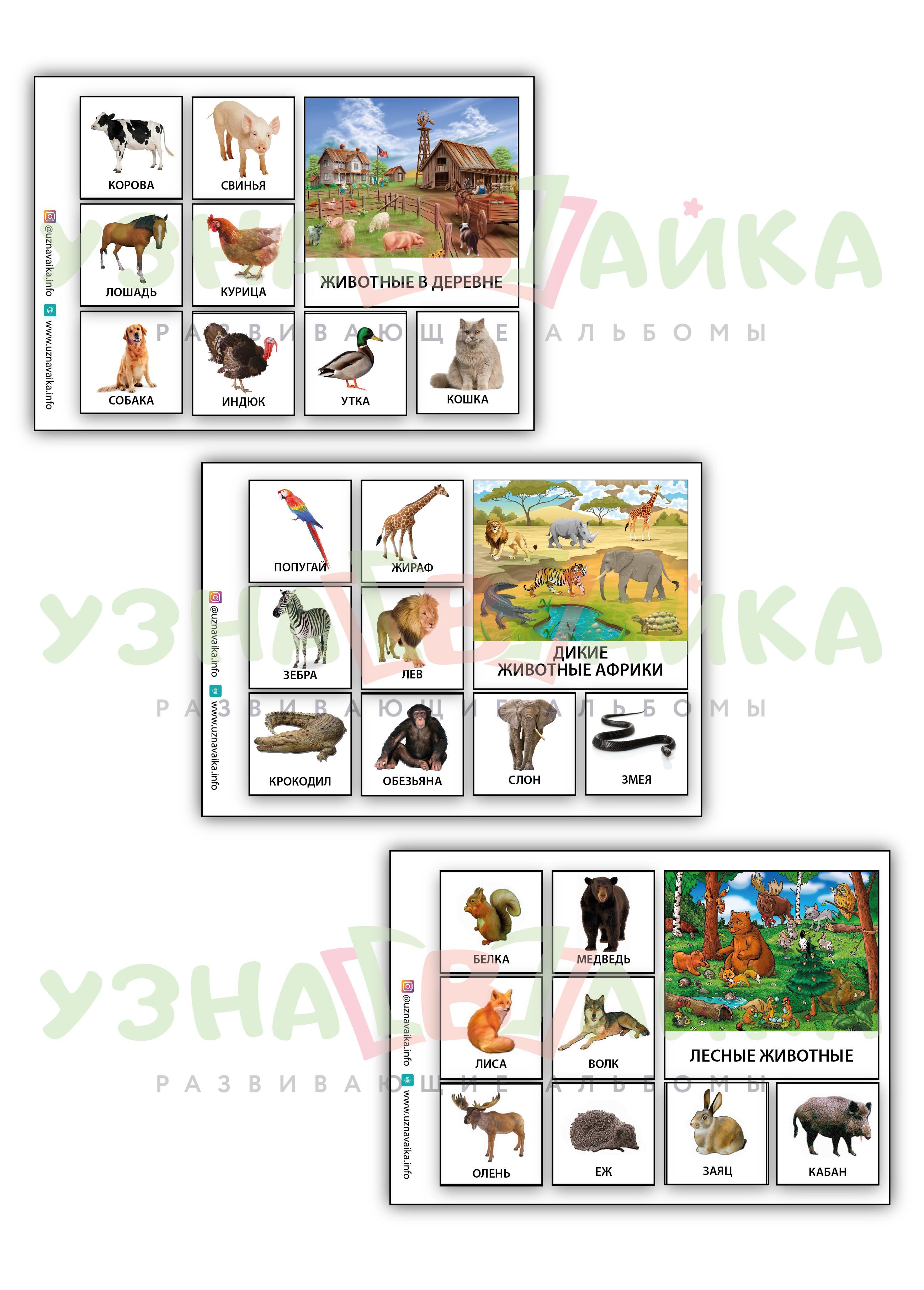 Какие выделяют основные среды обитания живых организмов — виды и краткое описание