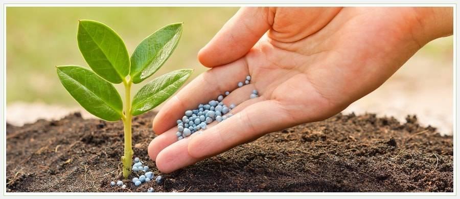 Что такое плодородие почвы? от чего оно зависит? от чего зависит плодородие почвы.