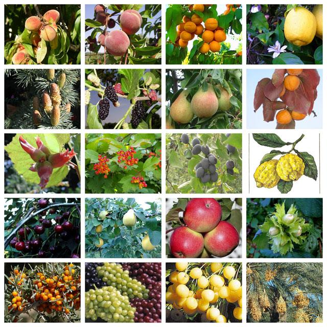 Что такое вегетация плодовых деревьев