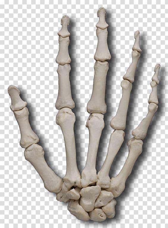Кость — википедия. что такое кость