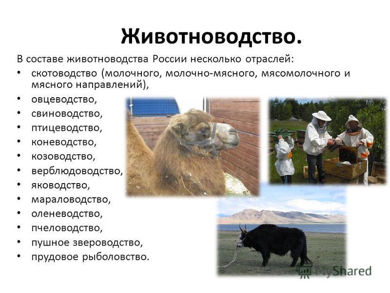 Сельское хозяйство: животноводство. конспект. кратко - учительpro