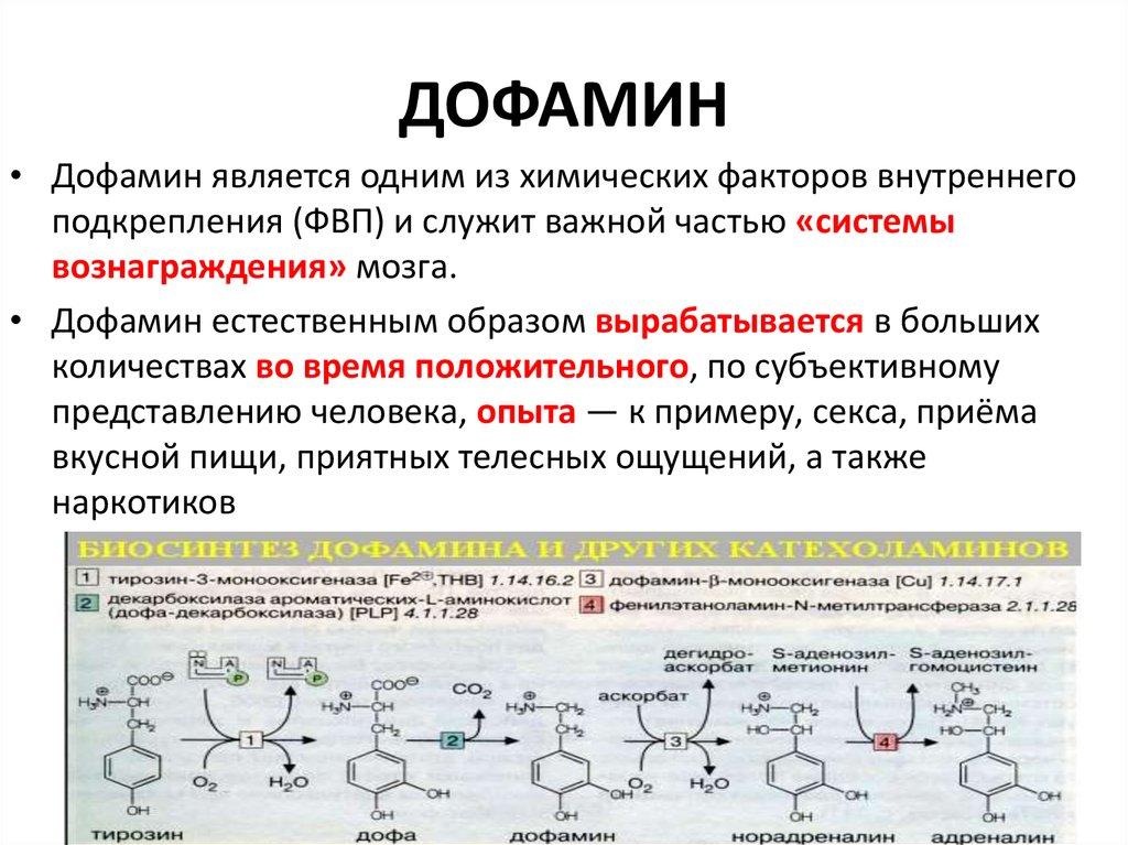 Дофамин, принцип действия, влияние на организм