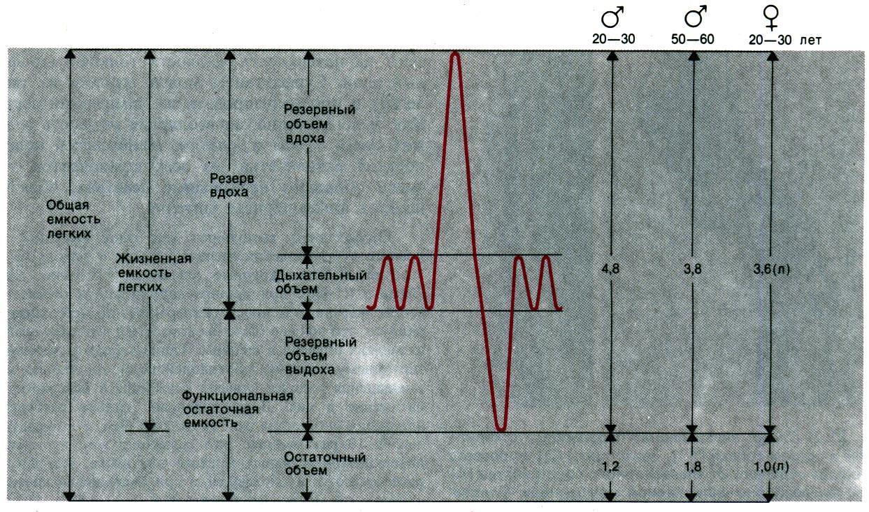 Понятия общей и дыхательной емкости лёгких