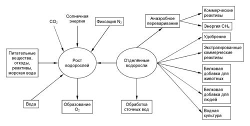 Культивирование клеток и тканей: особенности и интересные факты