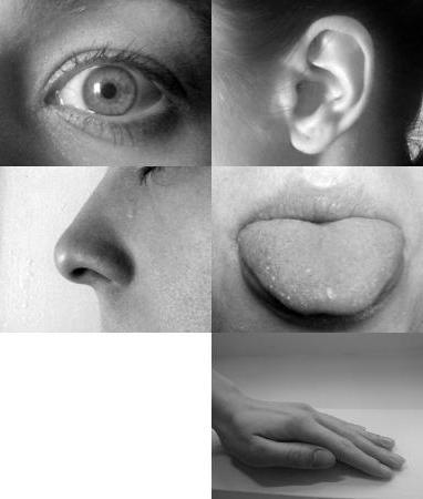 Тактильный человек: кто это такой? примеры, описание простыми словами. как влияет тактильность на развитие ребенка?