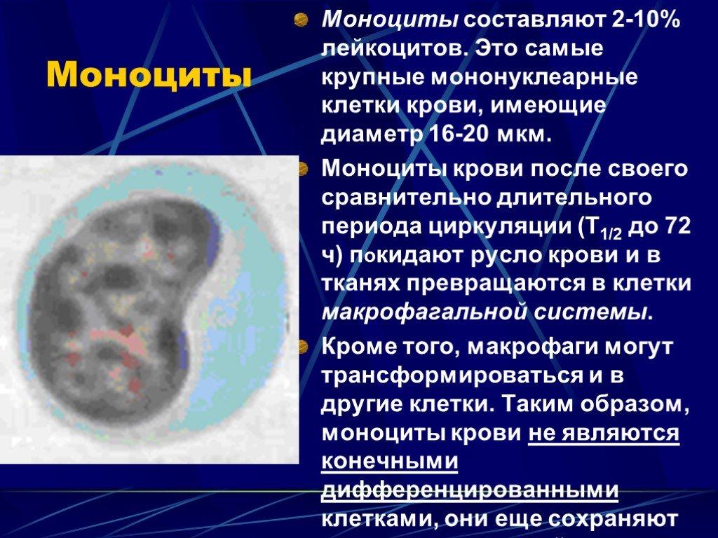 Моноциты (макрофаги): роль и функции, нормы в анализах, причины изменения концентрации