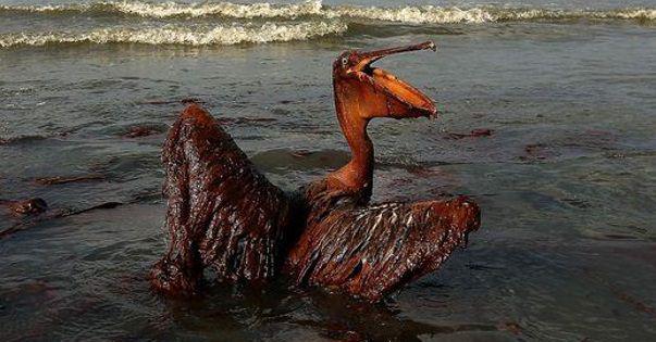 Экологическая катастрофа — википедия. что такое экологическая катастрофа