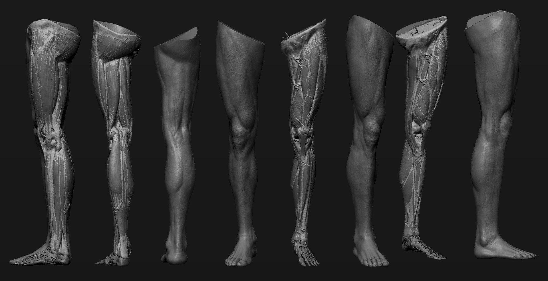 Что такое нога