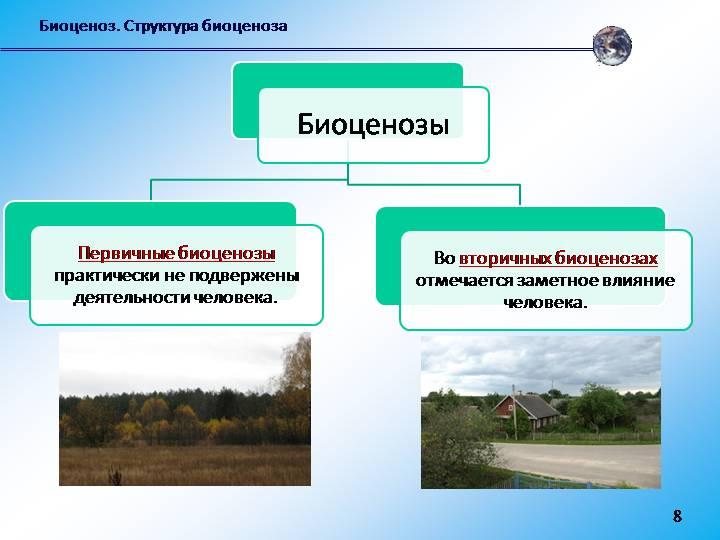 Биоценоз - это что? структура биоценоза: пространственная и видовая