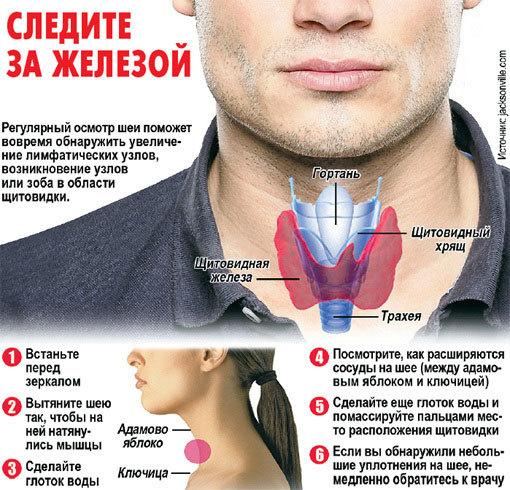 Щитовидная железа: 7 симптомов, что с ней проблемы - новости на kp.ua