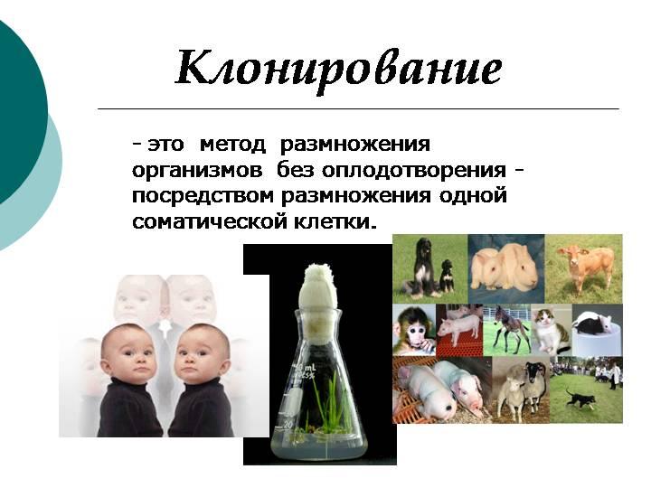 Плюсы и минусы клонирования. возможности и угрозы. за и против. | joinfor.ru
