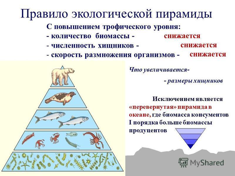 Каковы трофические уровни? экологическая пирамида