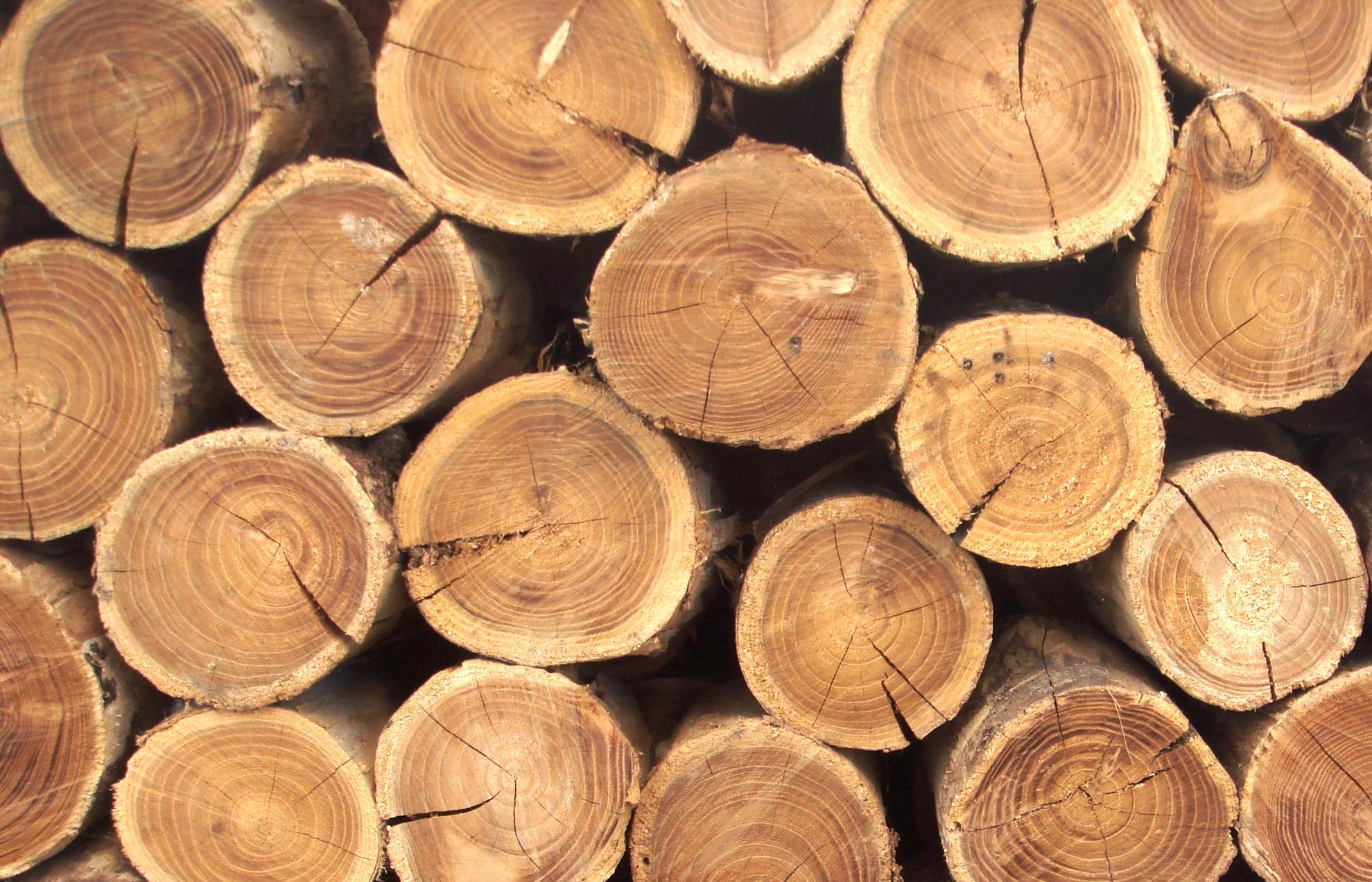 Дерево что это? значение слова дерево