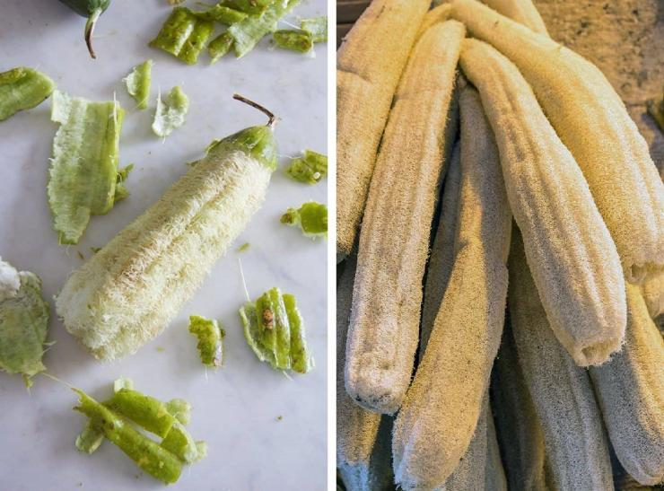 Люфа: полезные свойства, выращивание натуральной мочалки, применение