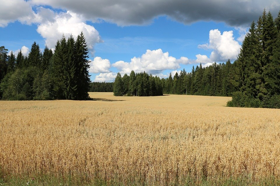 Сельская местность: определение, управление и перспективы развития