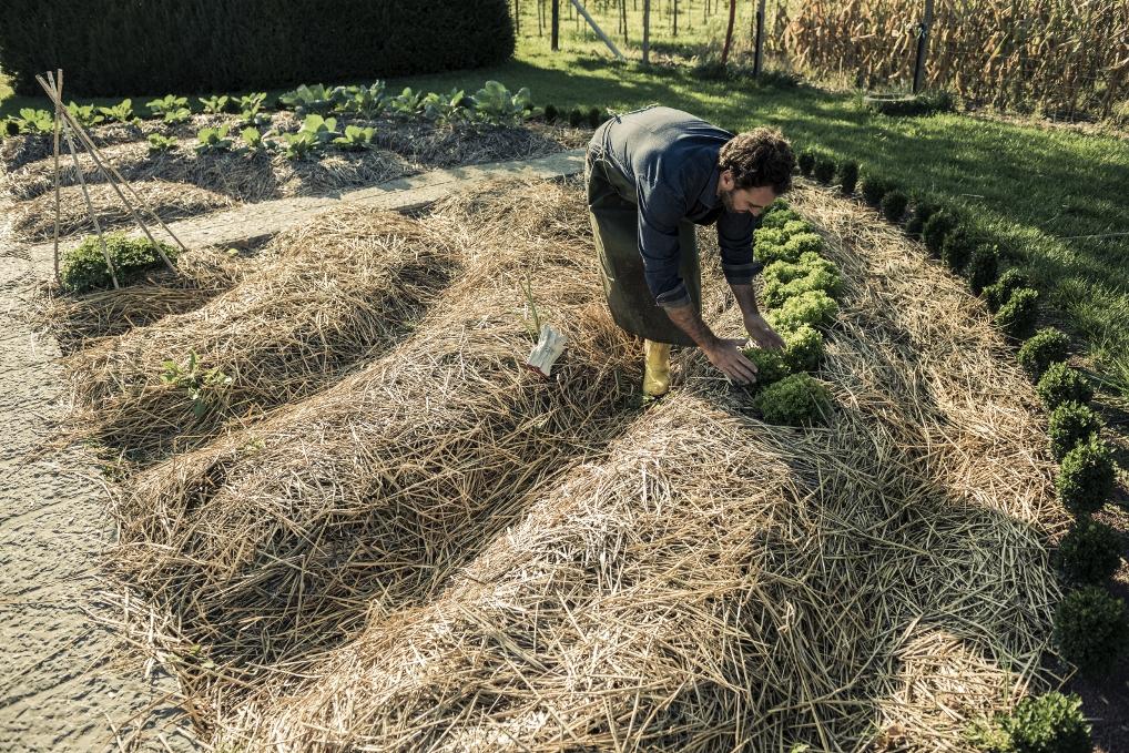 Компостная куча по правилам. как сделать компост своими руками? фото — ботаничка.ru