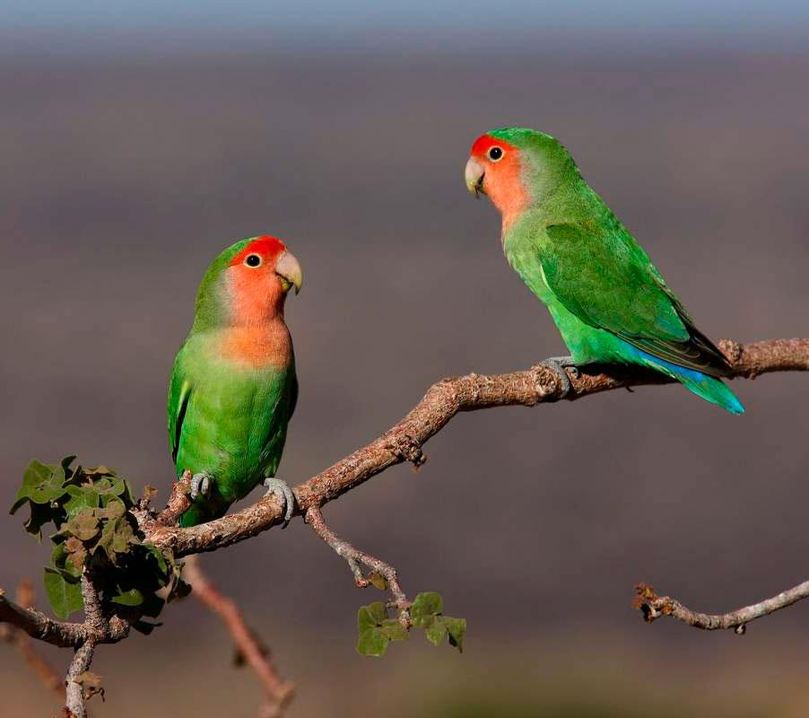 Как выбрать попугая – здорового, красивого и разговорчивого?