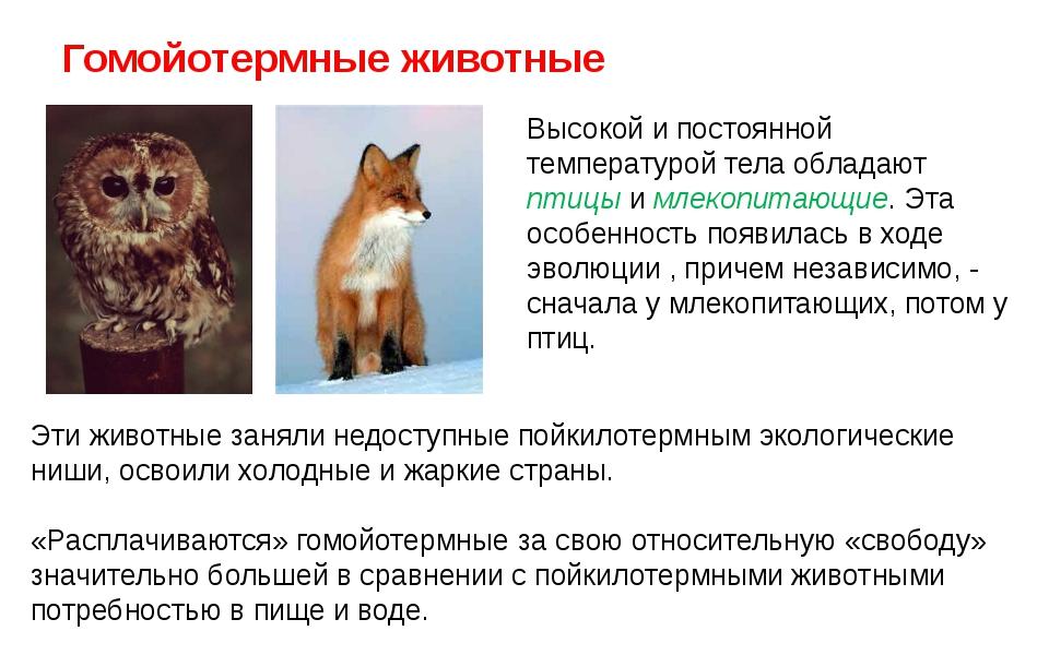 Животные пойкилотермные