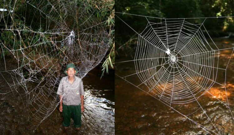 Что такое всемирная паутина - узнай что такое