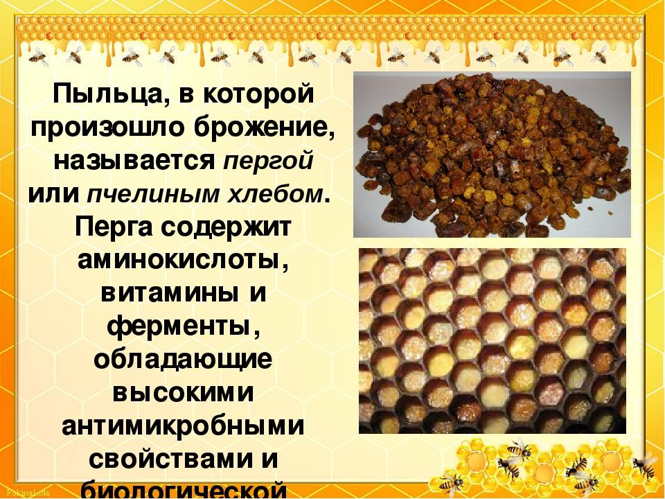 Пчелиная перга: полезные свойства и противопоказания, как принимать, отзывы